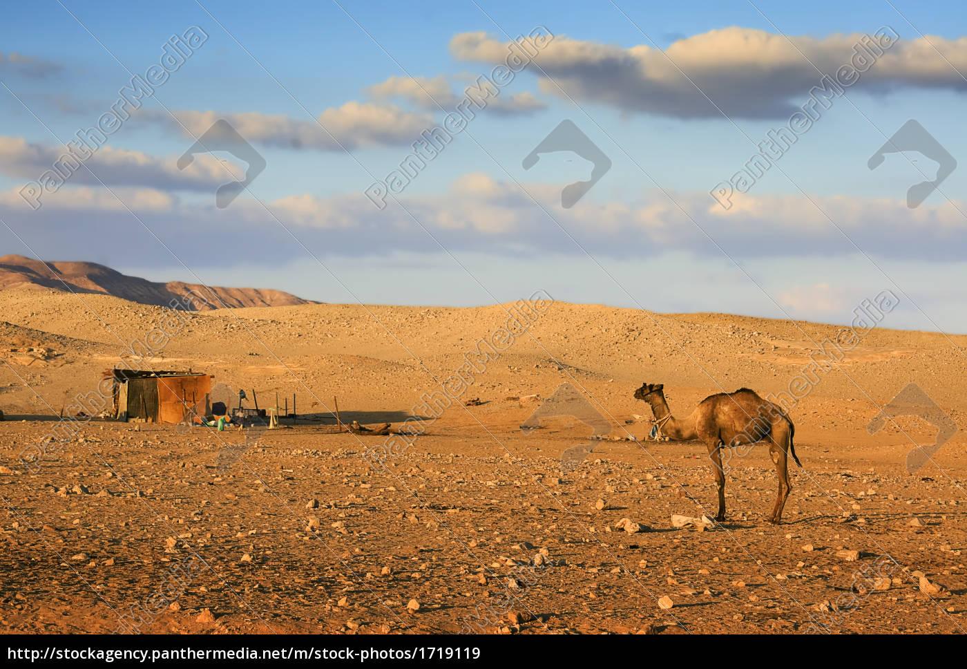 beduins, life - 1719119