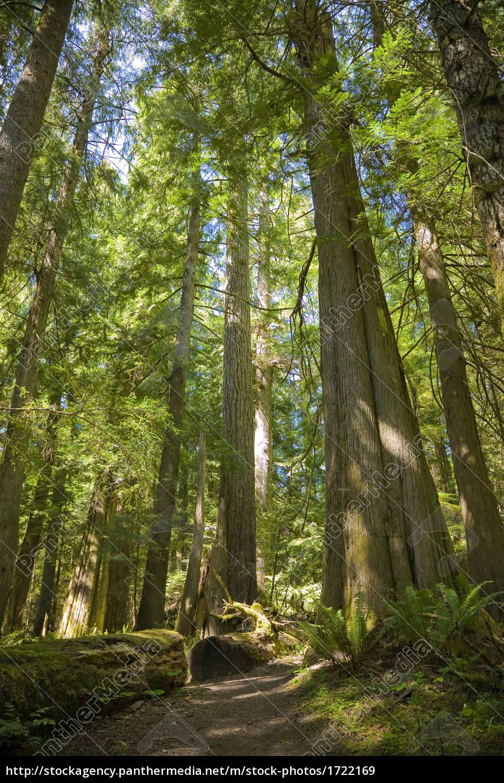 environment, enviroment, tree, trees, outside, woods - 1722169