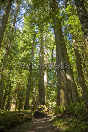 olympic, national, park - 1722169