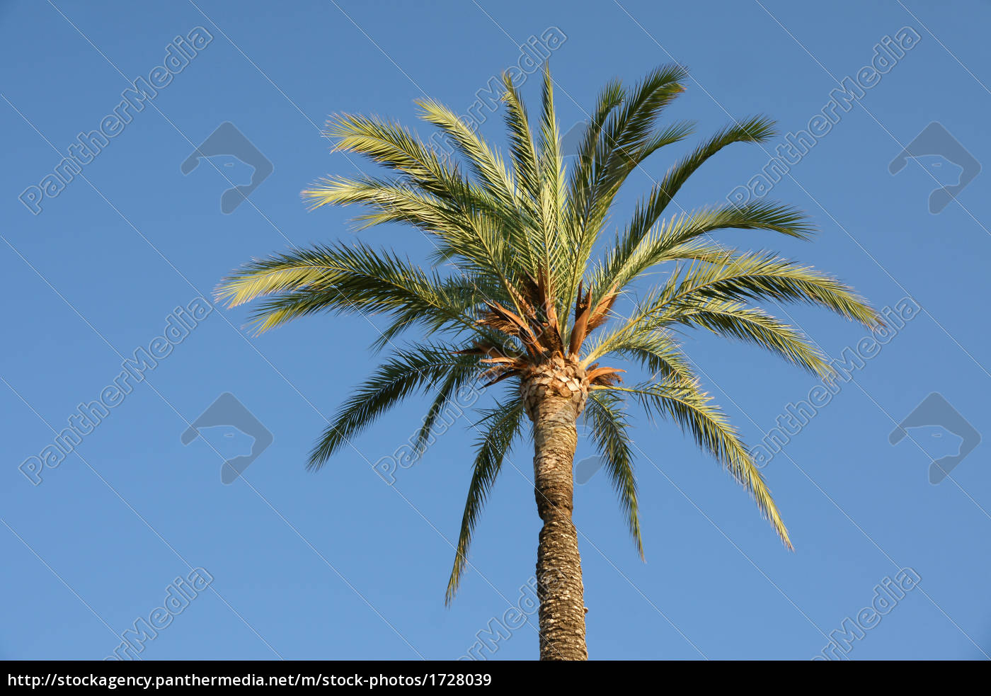 tree, of, the, south - 1728039