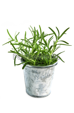 fresh, herbs, -, rosemary - 1736269