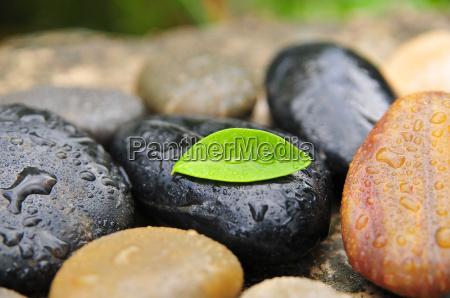 stones, water, drop, leaf - 1739393