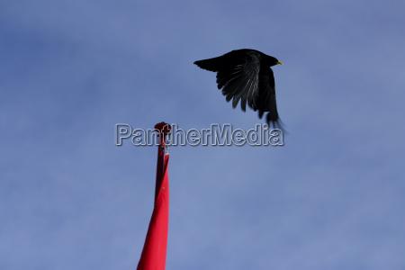 blue flight takeoff daw flap firmament