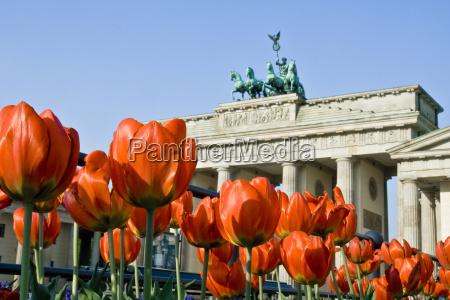 puerta de brandenburgo con los tulipanes