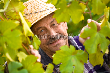 happy, senior, vintner - 1763445