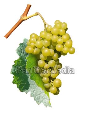 grapes - 1765131