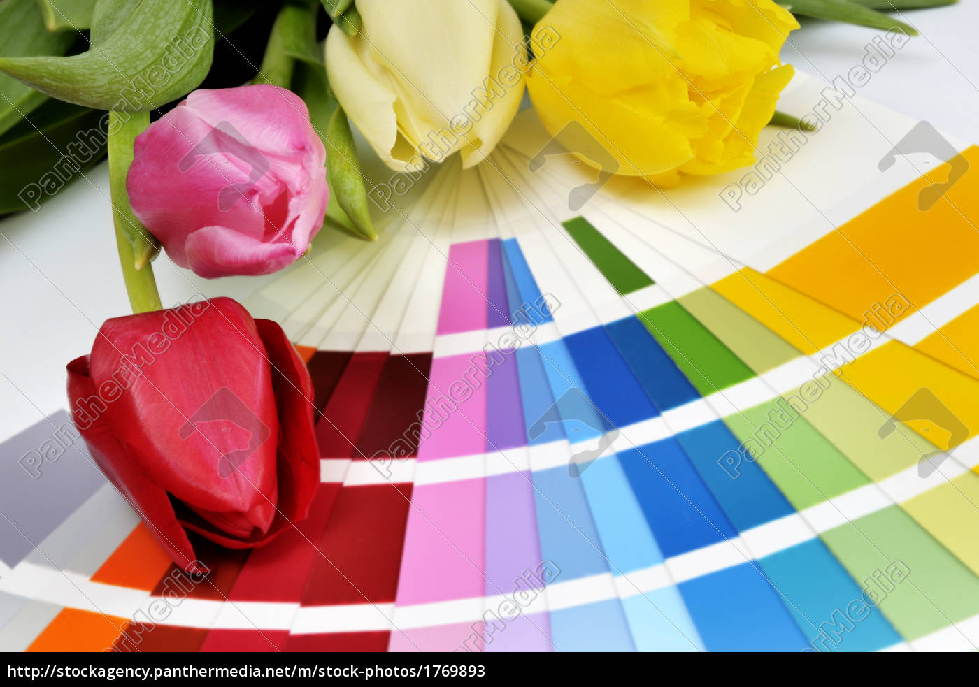 color, planning - 1769893