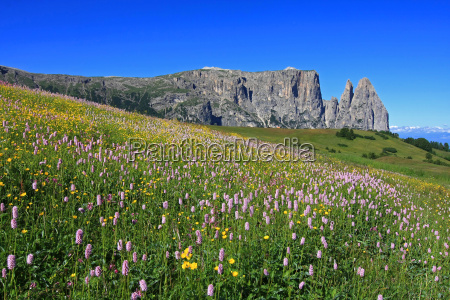 summer pastures in the high mountains