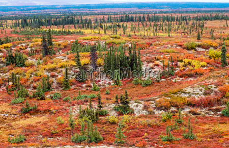tundra landscape in autumn color