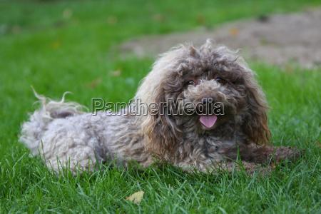 stud, dog - 1773725