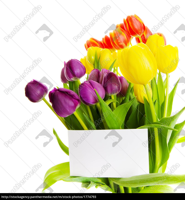 tulip, gift - 1774793