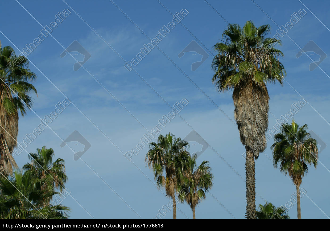 palm, group - 1776613