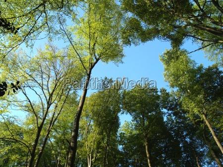trees - 1778389