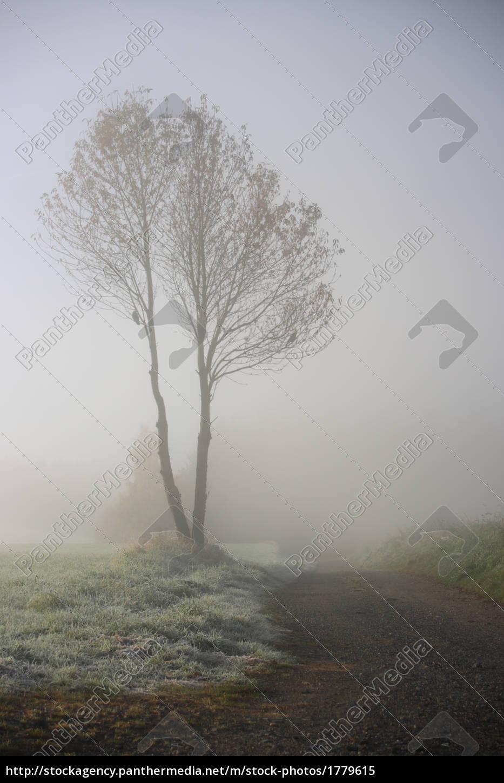 fog - 1779615