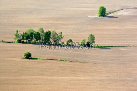 tree trees green agriculture farming field