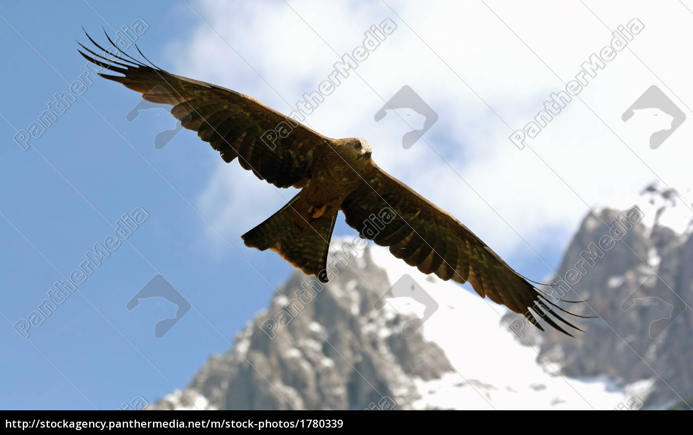 eagle, in, the, alps - 1780339