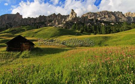 flower meadows at cir