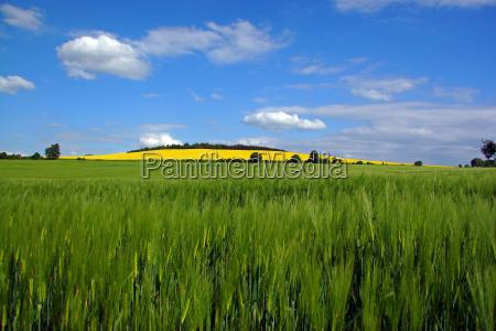 field spring may grain field mountain