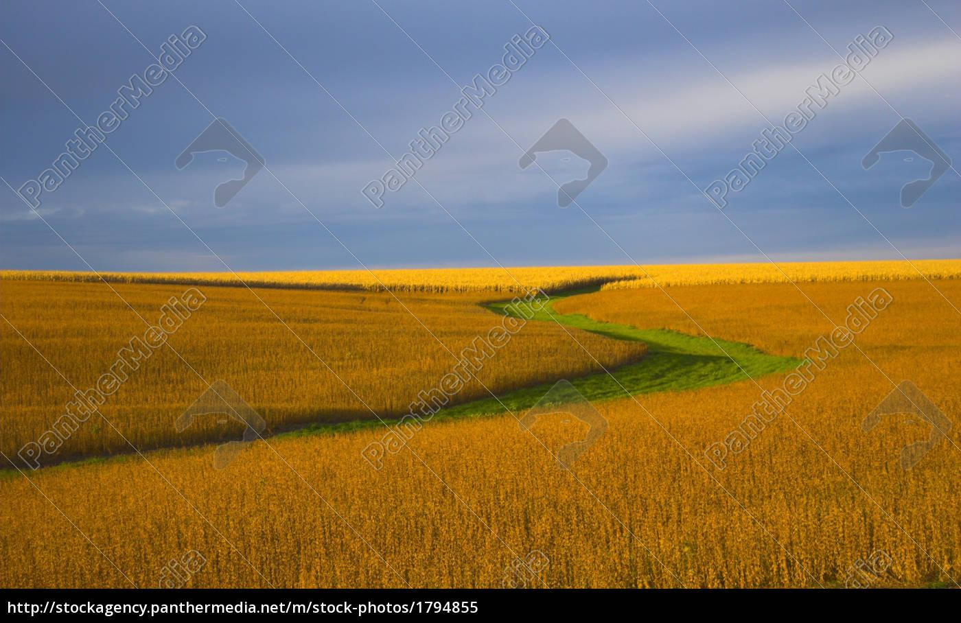 soybean, field, - 1794855