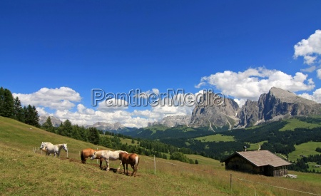 on the alpe di siusi