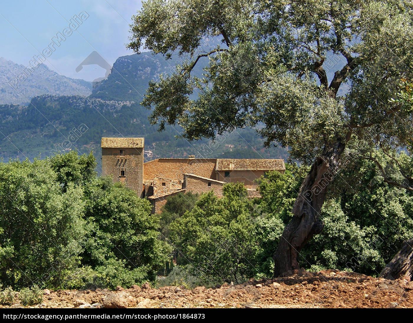 finca, in, olive, grove, majorca - 1864873