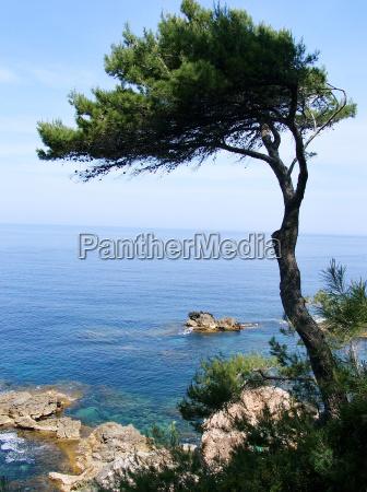 pine, on, the, mediterranean - 1864779