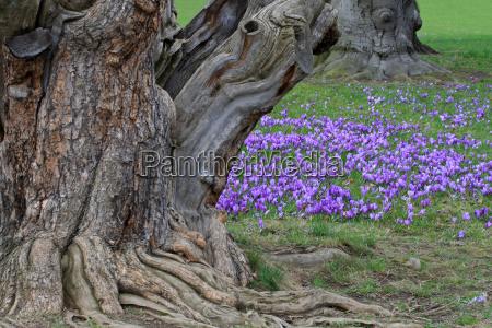 between ancient trees