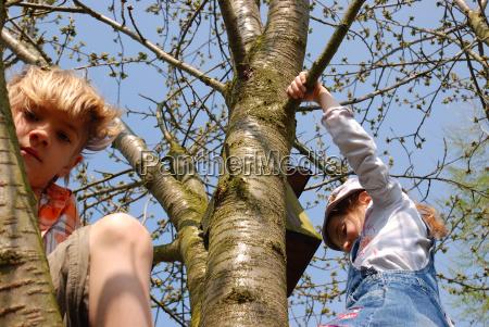children climbing on tree