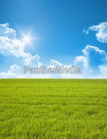 blue sky with green meadow