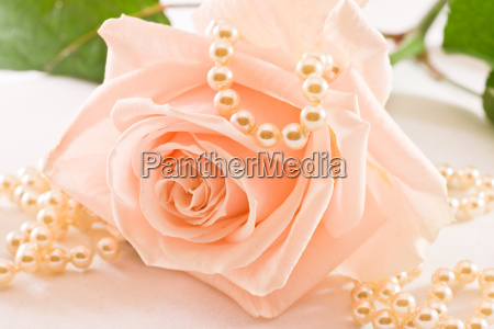 soft pink rose and pearls