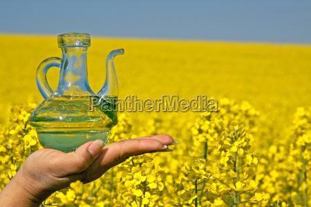 rapeseed oil bottle blossoming rape field