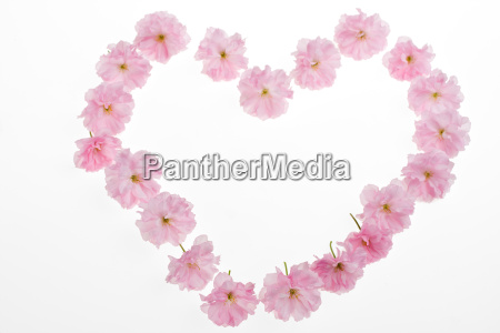 heart of pink cherry blossoms on