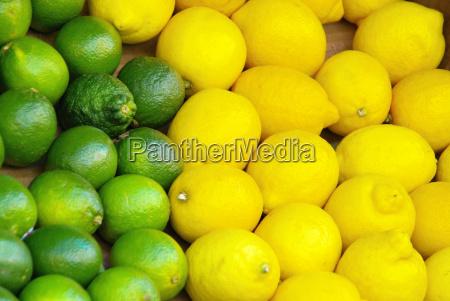 limone lemon lime citrous 01