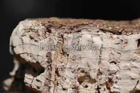 cork undressed phellen