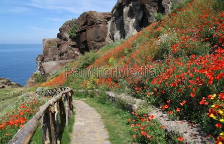 poppy landscape 1