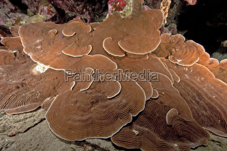 ocean and mushroom coral
