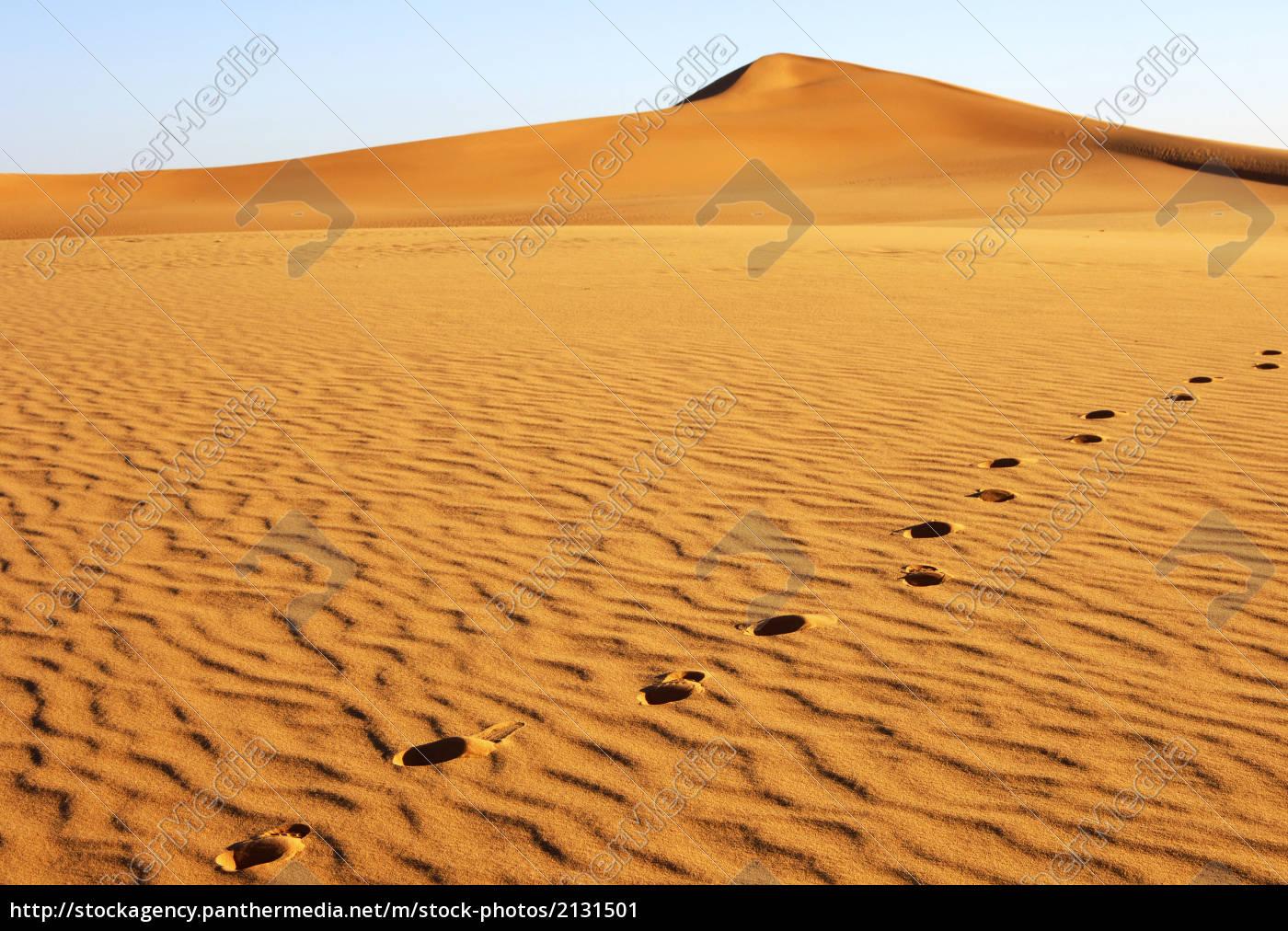 Stock Photo 2131501 Footprints On A Sand Dune Sahara