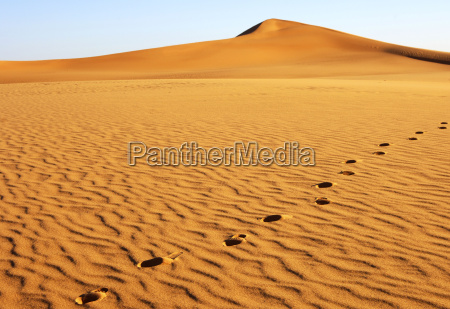 footprints on a sand dune sahara