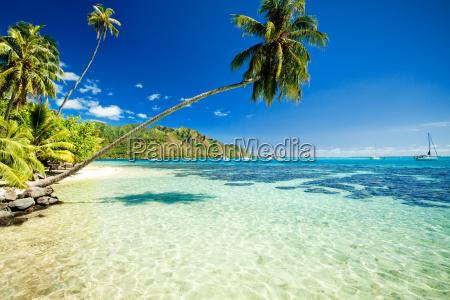 palmy wiszace nad przepieknej laguny