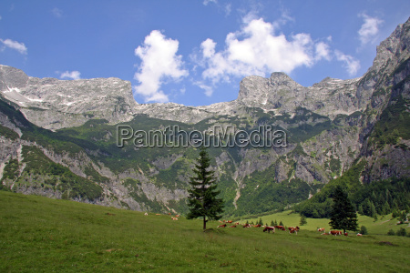 mountains alps alp valley mountain scenery