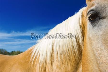 closeup of horses face