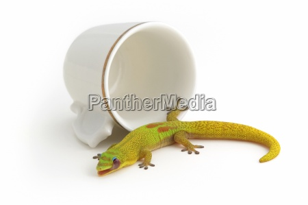 gecko and tea cup