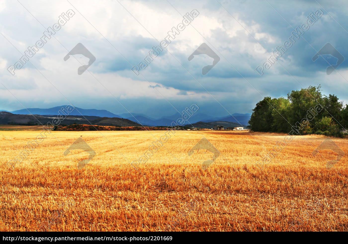 autumn, field - 2201669
