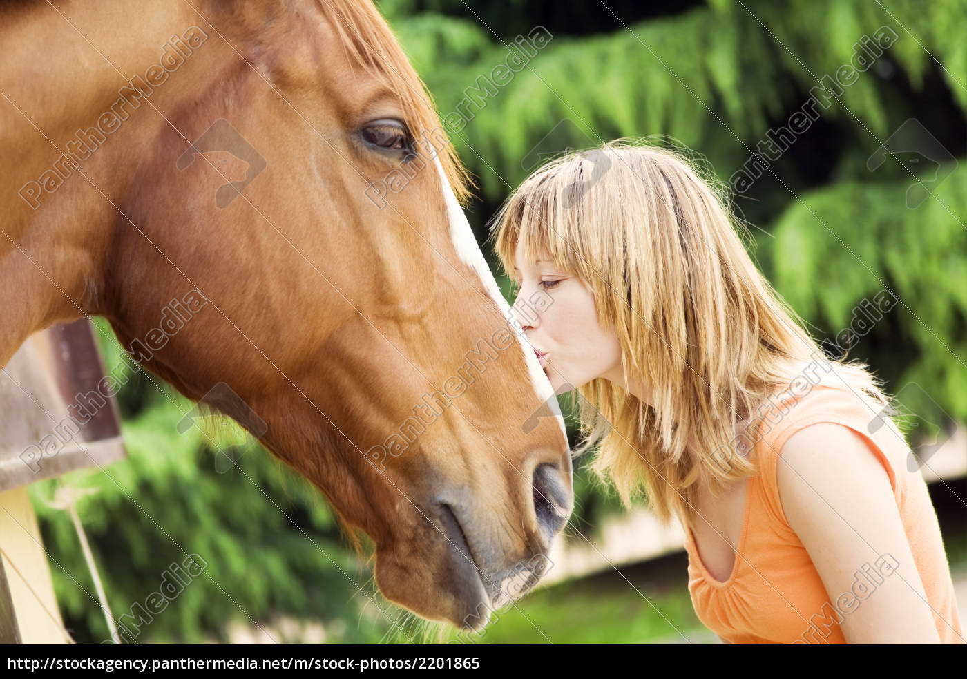 horse - 2201865