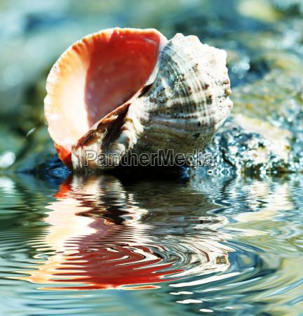 shell - 2201951