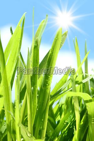 tall, grass, going, against, blue, sky - 2201497