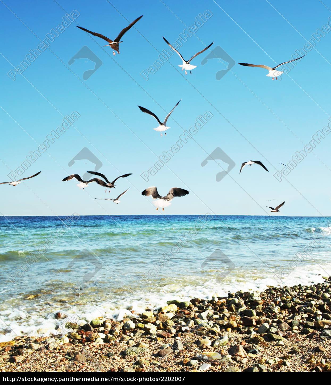 sea, gulls - 2202007