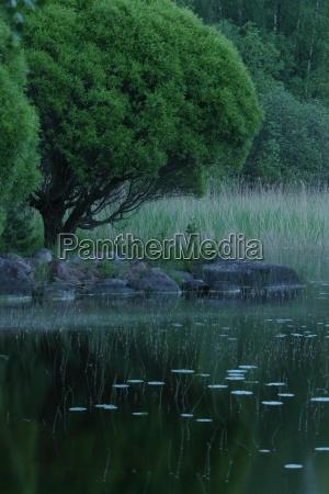 nature peaceful trees climate reflection lake