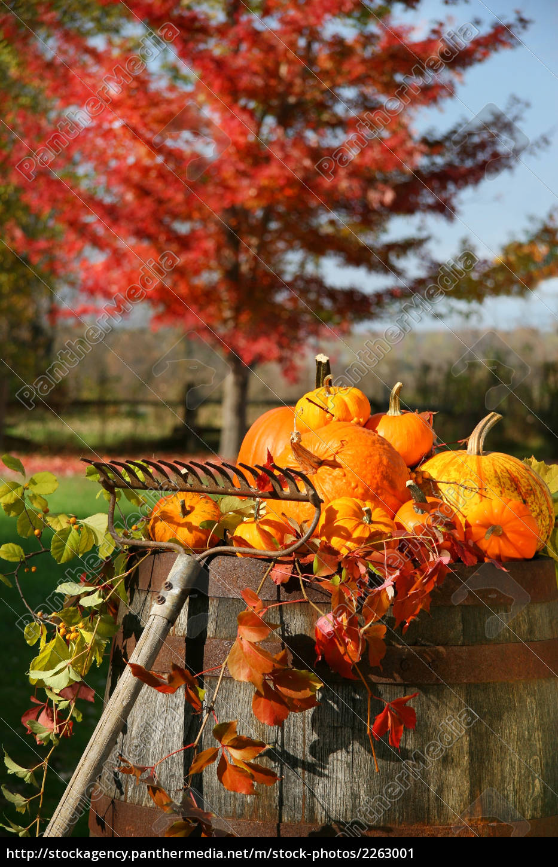 autumns, colorful, harvest, - 2263001