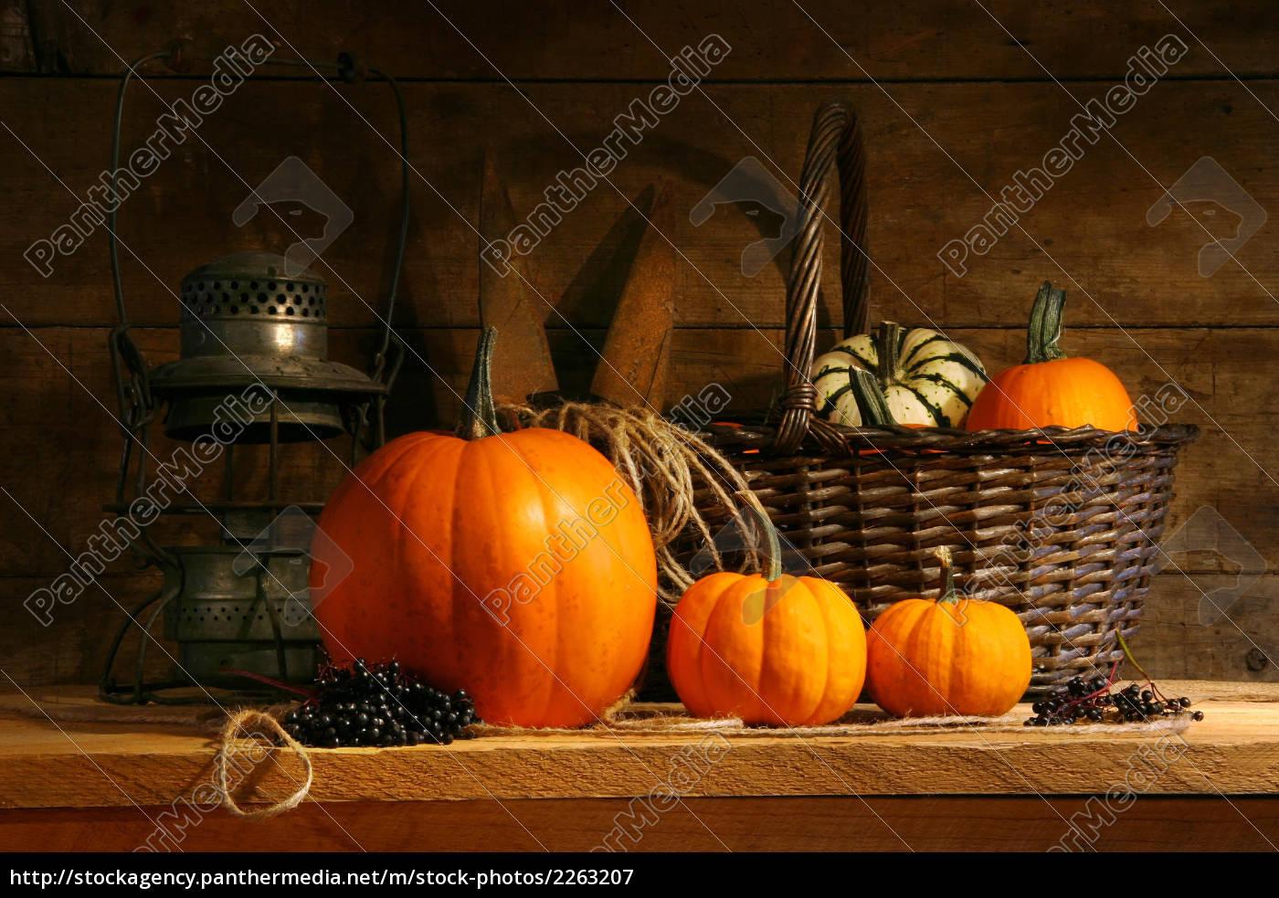 basket, on, a, shelf, - 2263207